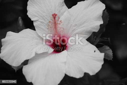 Flower in the bushes