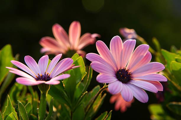 Fleur dans la soirée - Photo