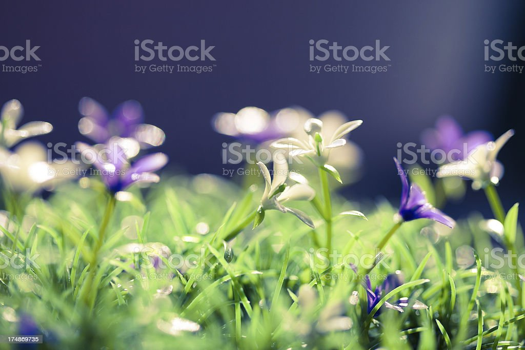 Flower in the field royalty-free stock photo