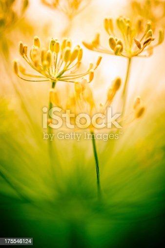 Flower in the field.