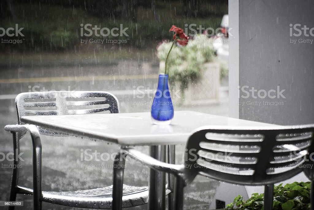 Flower in the rain royalty-free stock photo