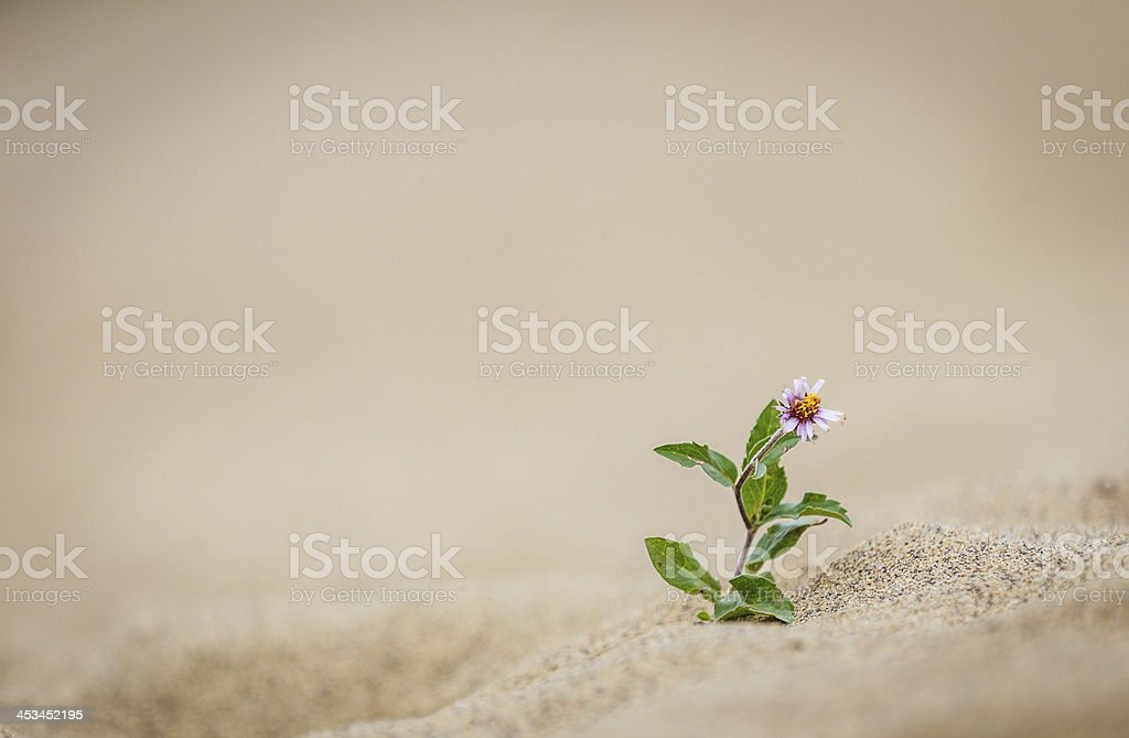 Blume im Sand stock photo