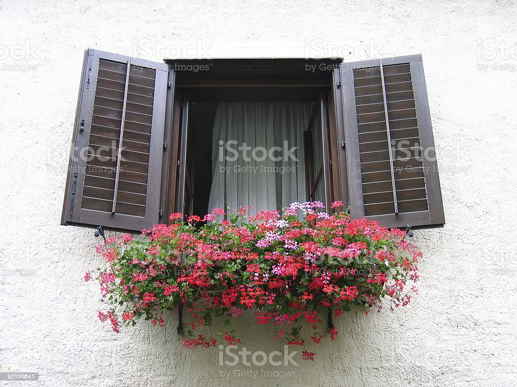 Flower in the window royalty-free stock photo