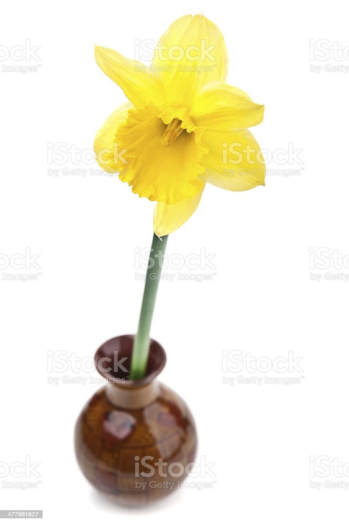 Flower in vase royalty-free stock photo