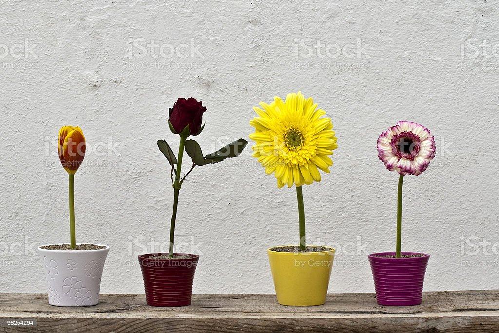 Flower in vase royalty-free stock photo