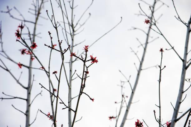 Flower in winter season picture id1299327853?b=1&k=6&m=1299327853&s=612x612&w=0&h=z4g02xw45jy ul4rswqz2jxipl2vffxcjndnlayf5k8=