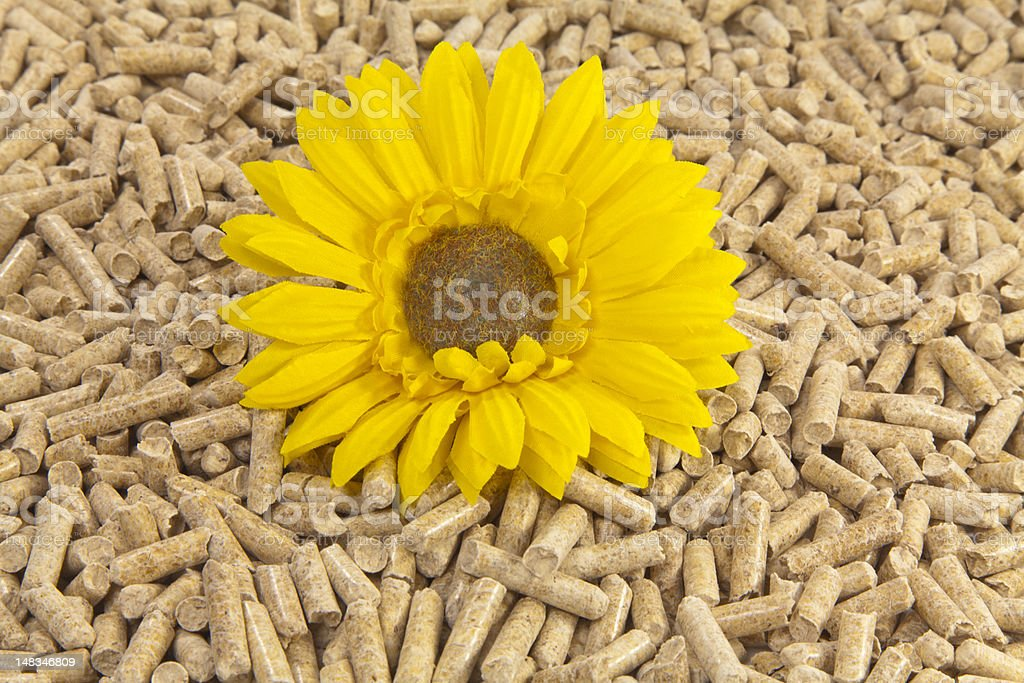 Blume in Holzpellets stock photo