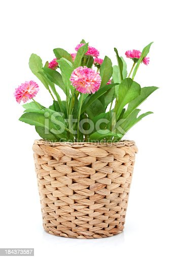 Flower in woven pot isolated on white background.