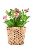 istock Flower in woven pot isolated on white background 184373587