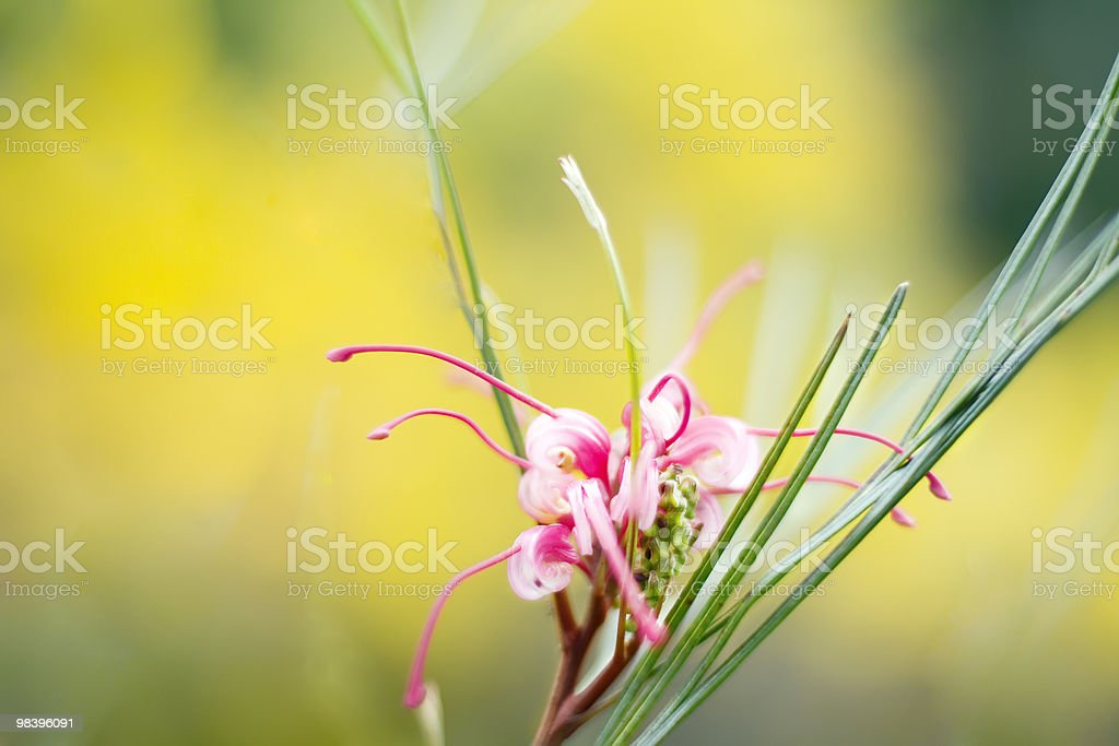 Flower in yellow royalty-free stock photo