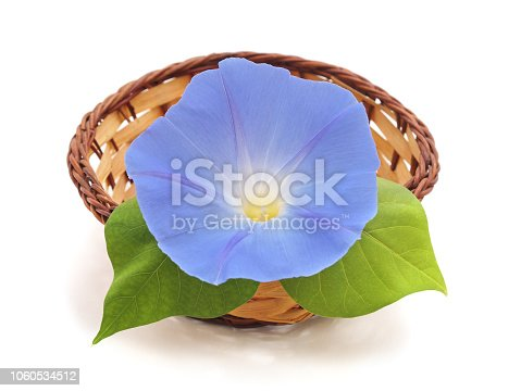 Flower ipomoea blue isolated on white background.