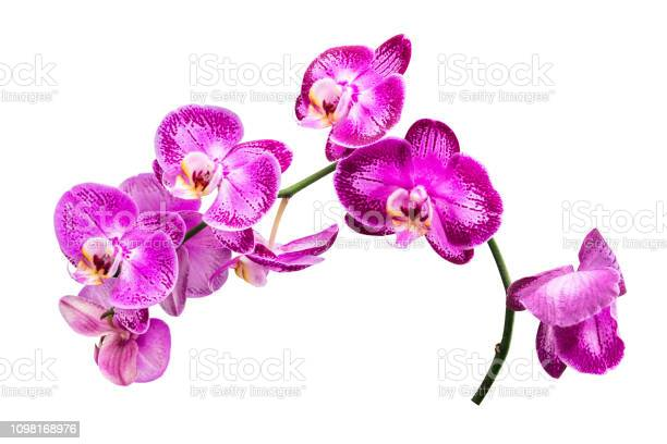 Flower isolated with clipping path picture id1098168976?b=1&k=6&m=1098168976&s=612x612&h=vyzs31k6pvbyvidldilext 1xbte f24fphknznjfgs=