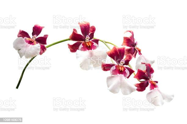 Flower isolated with clipping path picture id1098169076?b=1&k=6&m=1098169076&s=612x612&h=oqglvdny3evvewm9xcg3yq85kjeugghsbamfmgjftde=