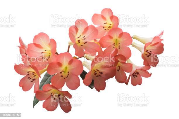 Flower isolated with clipping path picture id1098169150?b=1&k=6&m=1098169150&s=612x612&h=ufsrnxbrqehqxczij rrcjpksxlwa7054thk6xkn kg=