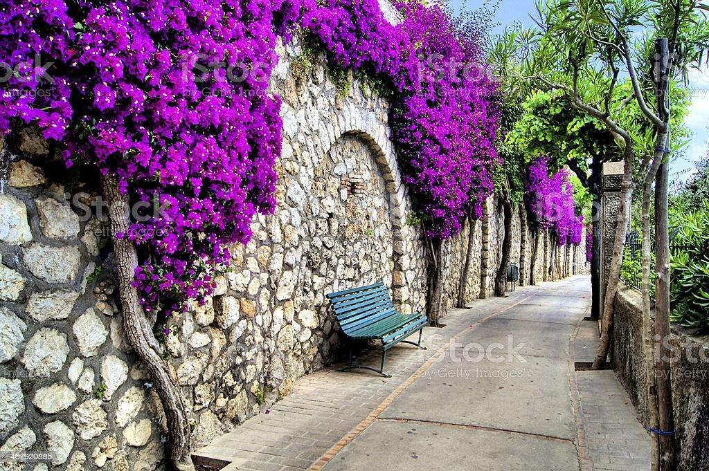 Kwiat lined lane – zdjęcie
