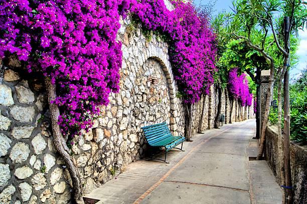 Flor de árboles lane - foto de stock