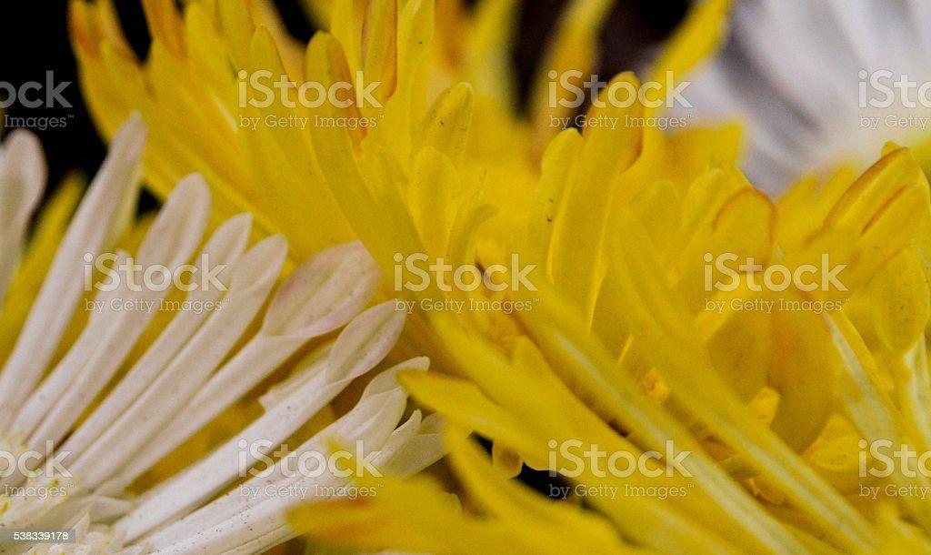 Flower Lovers stock photo