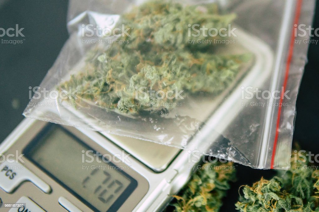 flower marijuana on a scales concept of legalizing herbs weed. A drug dealer weighs cannabis - Royalty-free Agriculture Stock Photo