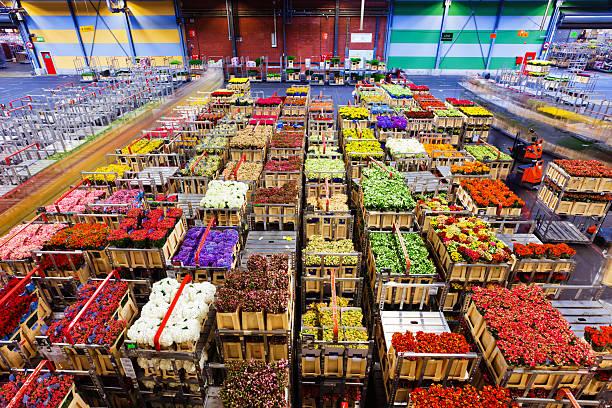 flower market of Aalsmeer stock photo