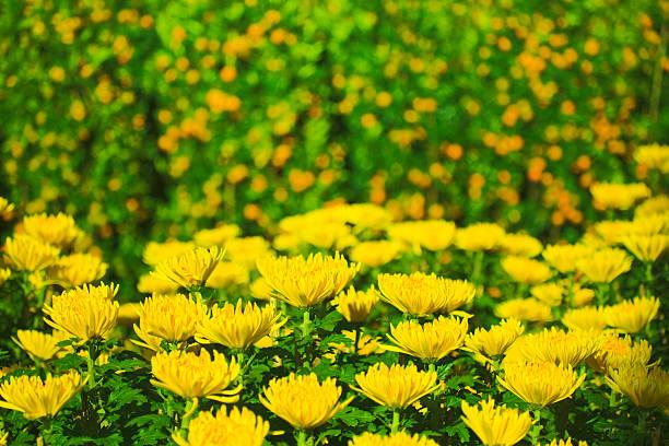 97 hình ảnh chợ hoa ngày tết năm 2018, tuyệt đẹp được chọn lọc