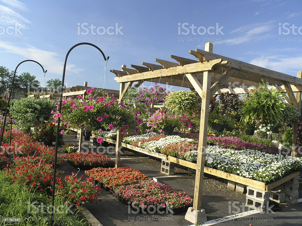 flower market stock photo