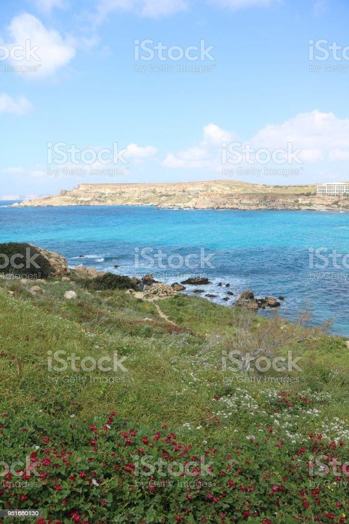 Flower meadow at Ghajn Tuffieha Bay at the Mediterranean Sea in Malta stock photo