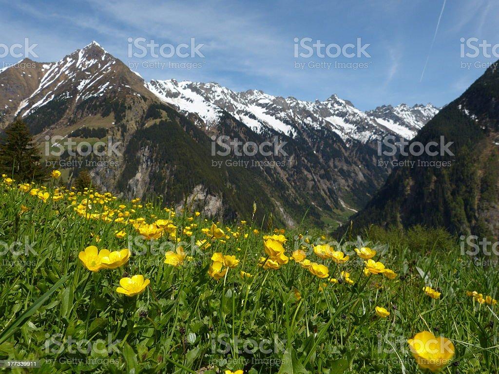 Blüte Wiese in den Alpen, Österreich – Foto