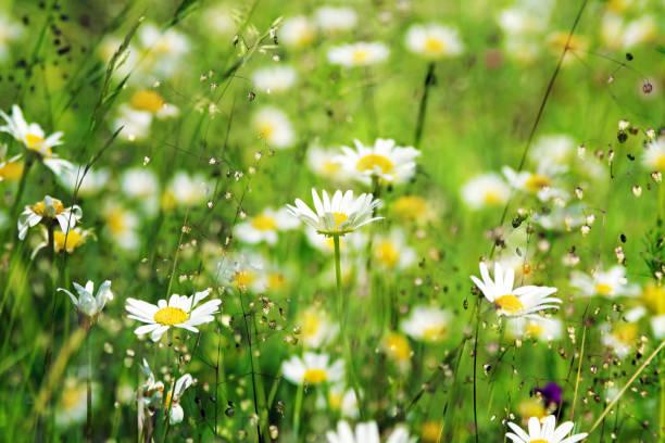 Blumenwiese im Sonnenschein – Foto