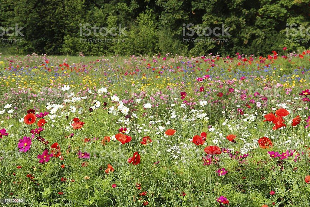 Flower meadow stock photo