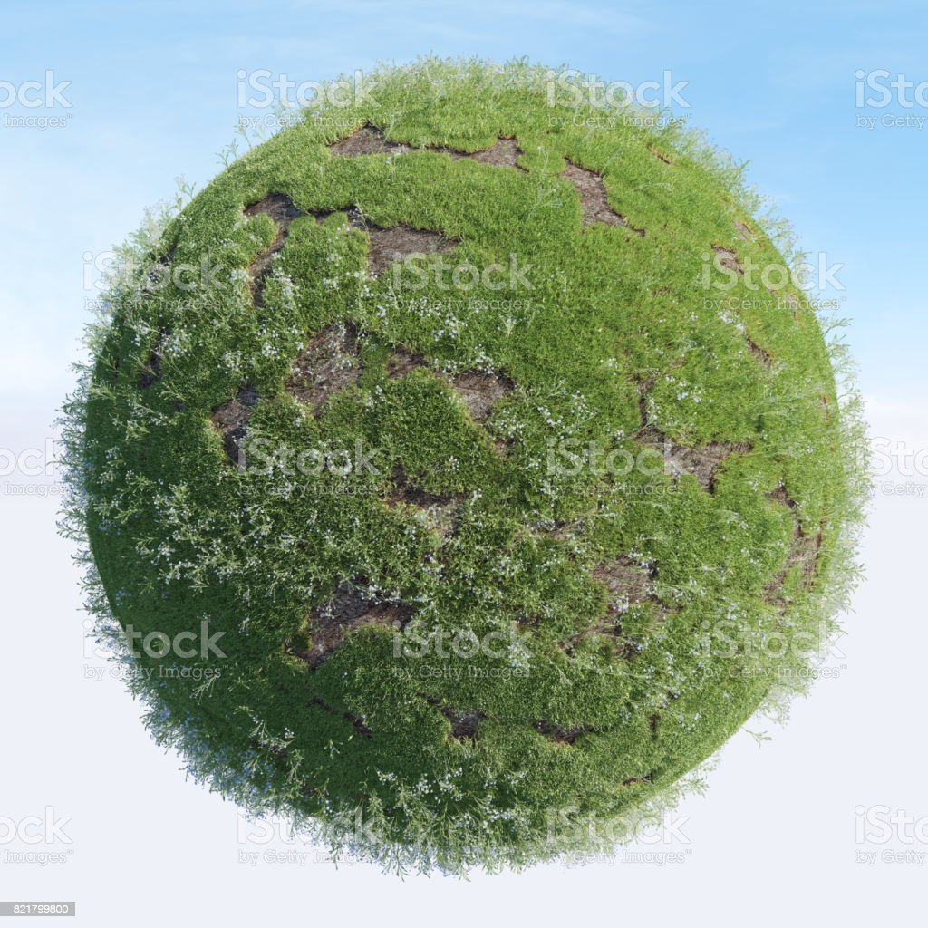 GRASS - Flower Meadow stock photo