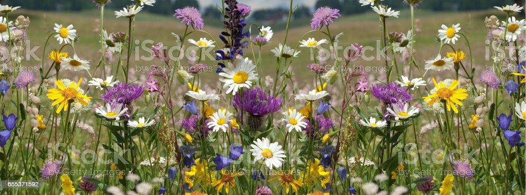 Flower meadow; wildflowers stock photo