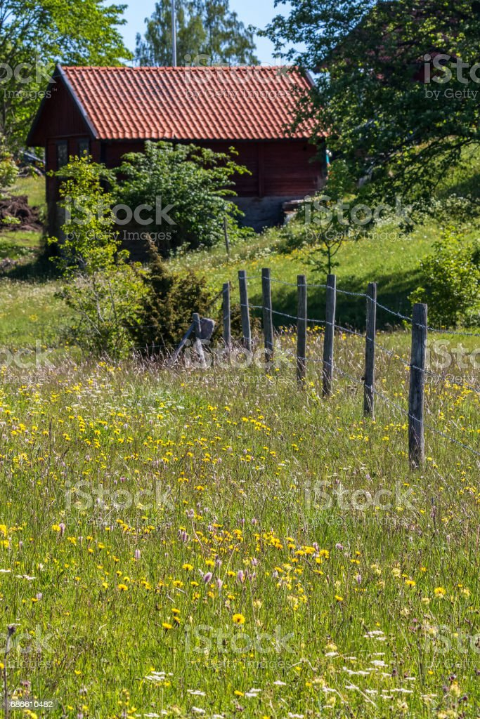 Flower meadow with an old shed in the background royalty-free stock photo