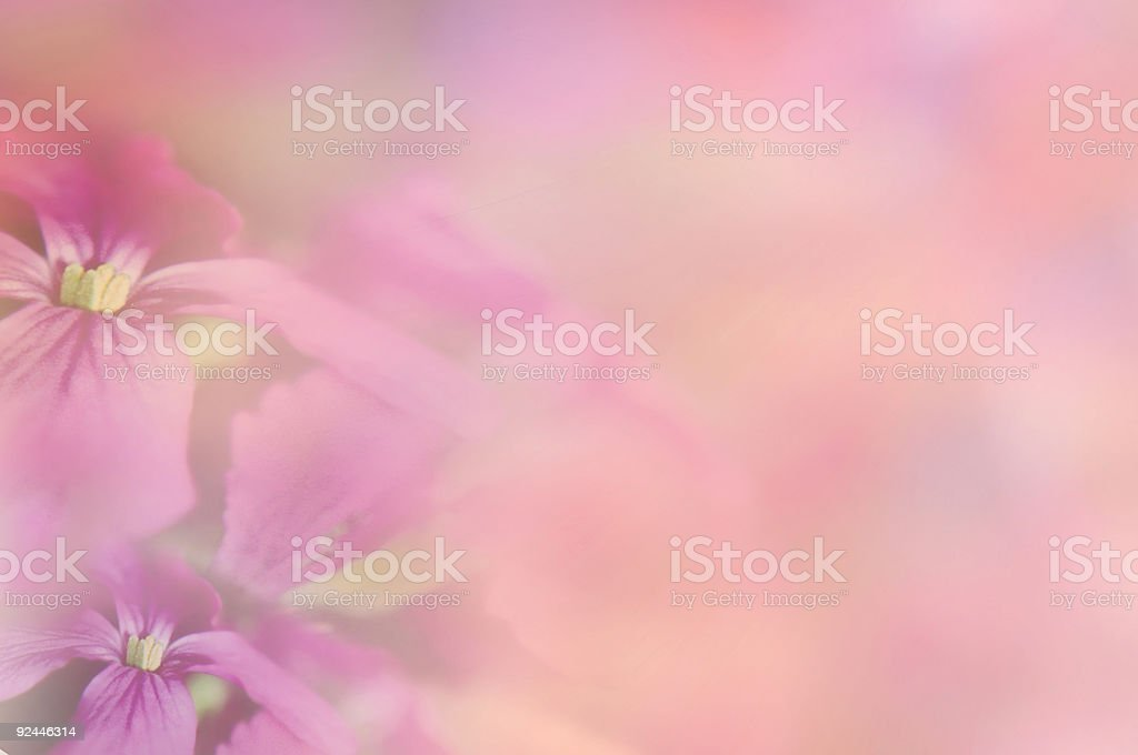Flower Medley royalty-free stock photo