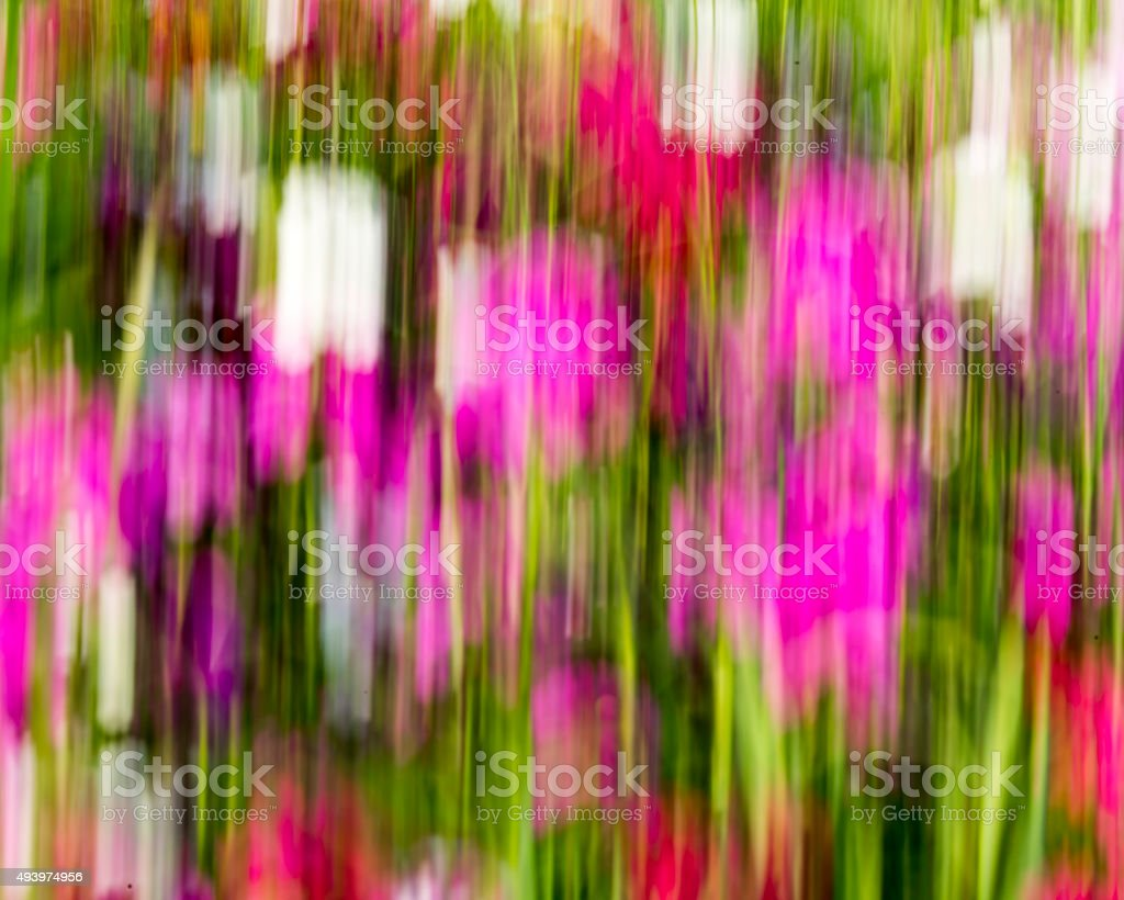 Flower Motion Blur stock photo