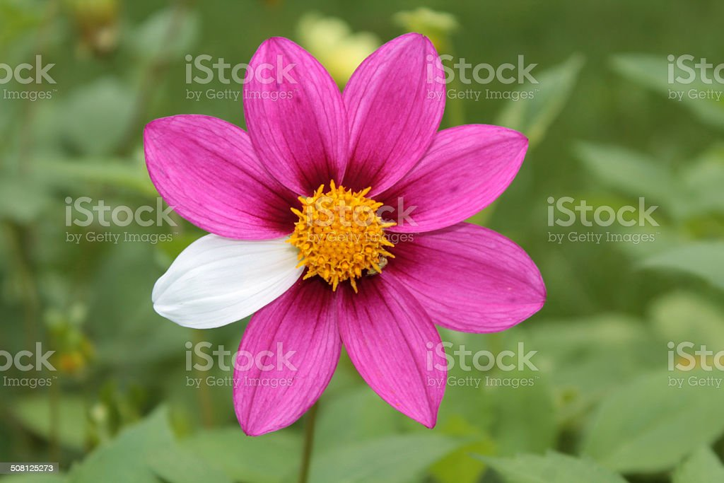 Flower mutant stock photo