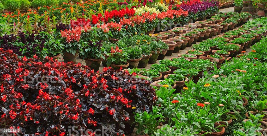 Flower Nursery stock photo
