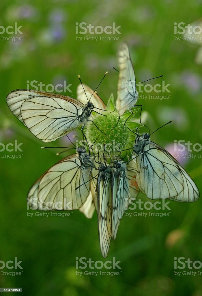 Flower of butterflies royalty-free stock photo