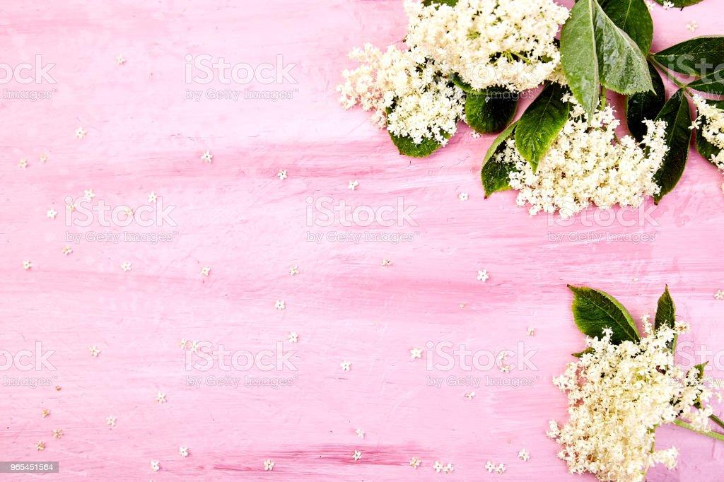 Flower of elder on pink background zbiór zdjęć royalty-free