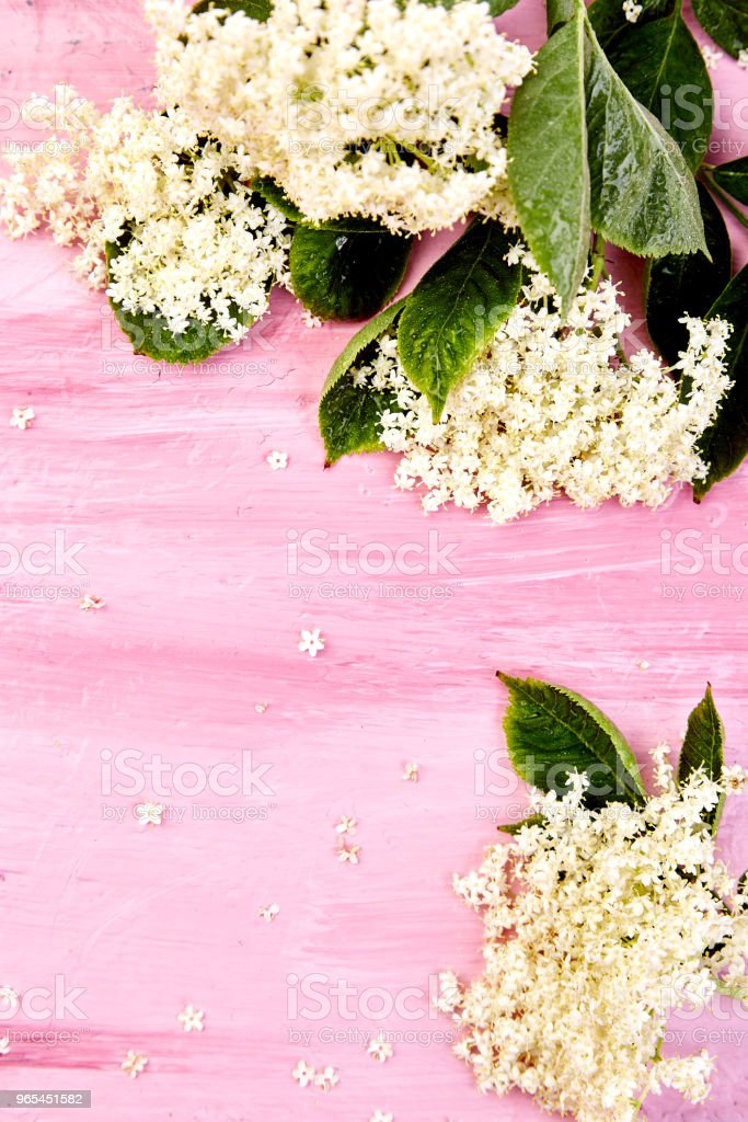 Flower of elder on pink background royalty-free stock photo