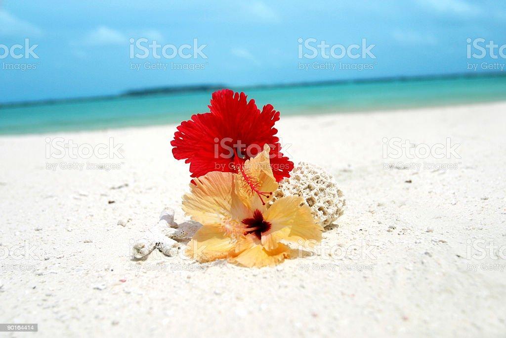 Flower of Paradise royalty-free stock photo