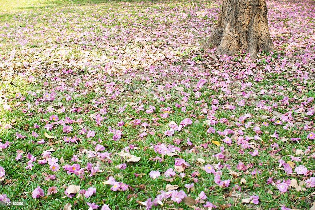Resultado de imagem para flores da arvore no chão