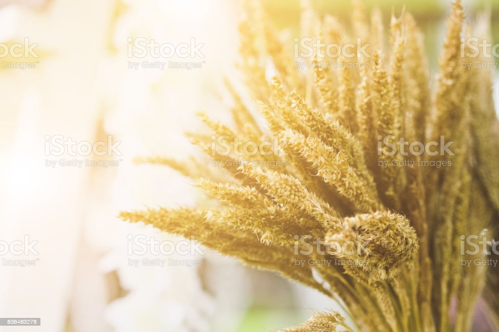 A flower of weed grass stock photo