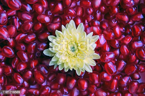 Flower of yellow chrysanthemum on a background. Purified grains of pomegranate ruby color. Juicy beautiful fruit. Background texture. Close-up.