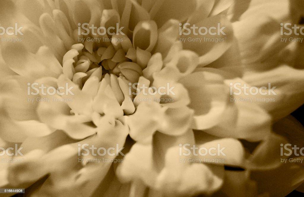 Flower- Old Syle stock photo