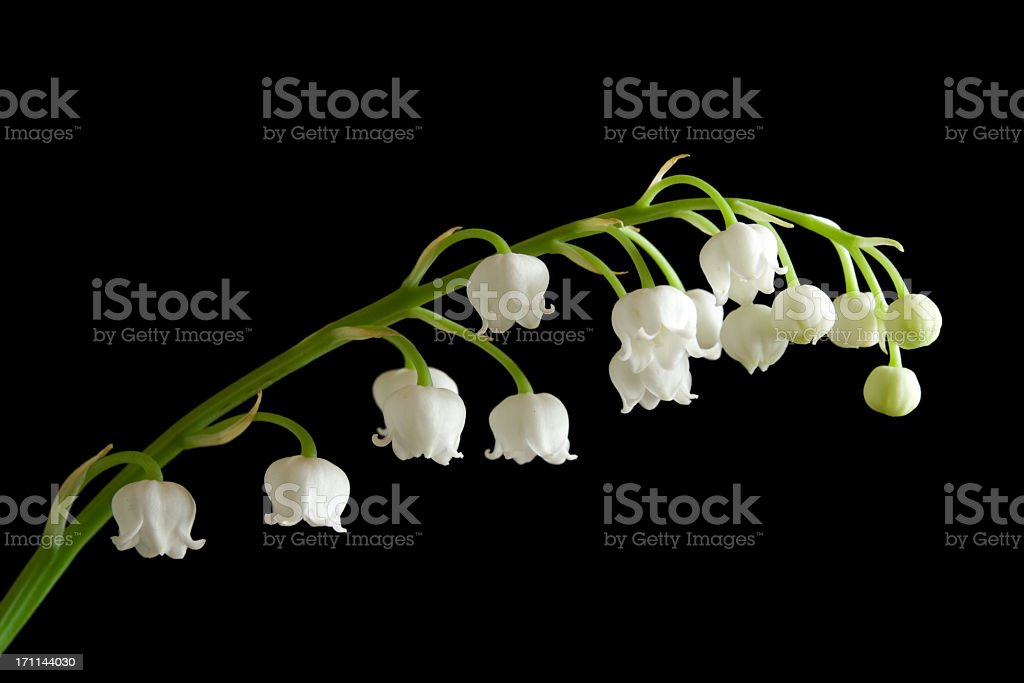 Flower on a black background. royalty-free stock photo