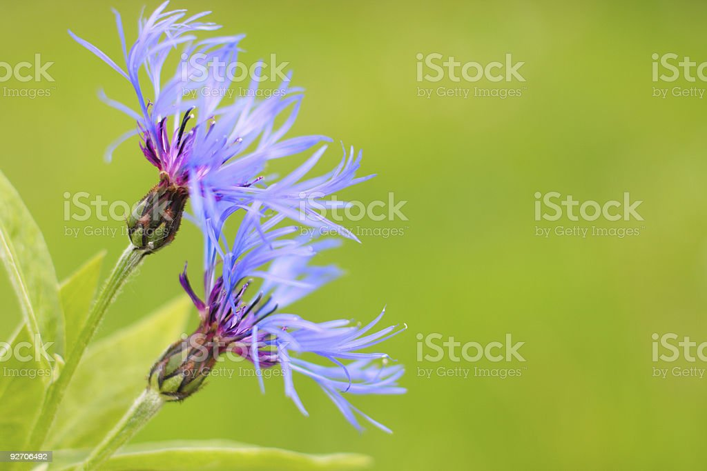 flower on background grass royalty-free stock photo