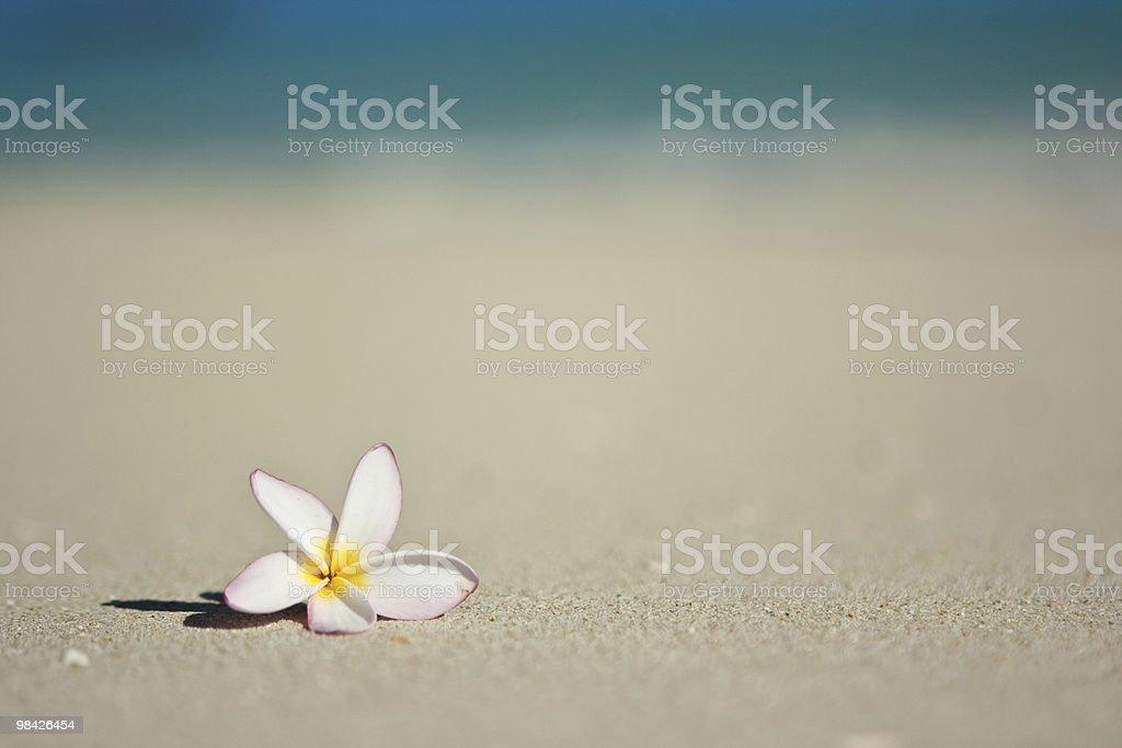 해변의 아이리스입니다 royalty-free 스톡 사진