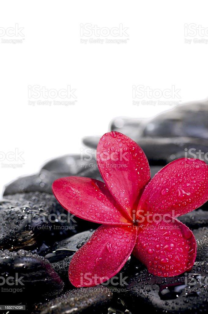 Flower on black zen stones extreme close up royalty-free stock photo