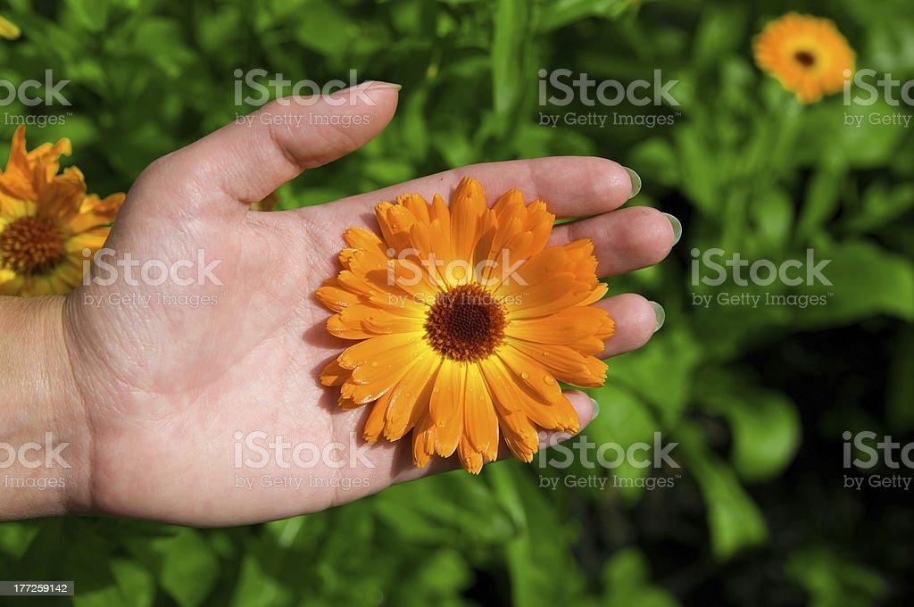 Flower on Hand stock photo