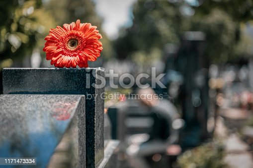 Religious tradition to put one flower in memory, of the grave in the cemetery, tragedy and sorrow for the loss of a loved one. Red Gerber was left on gravestone in the graveyard